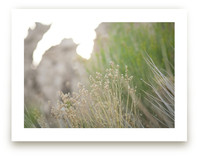 Gilded Grasses by Lindsay Ferraris Photography