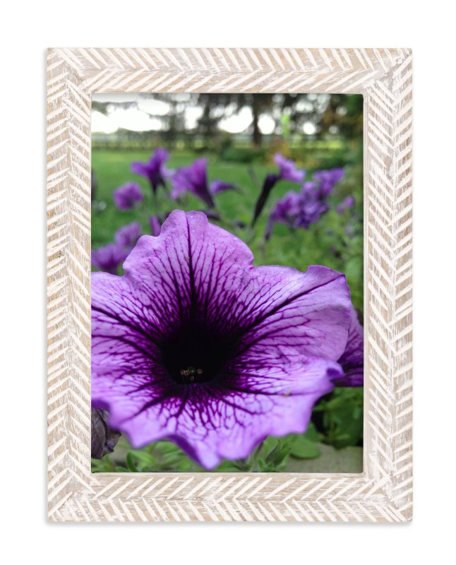 """""""Summer Star"""" - Art Print by Misty Hughes in beautiful frame options and a variety of sizes."""