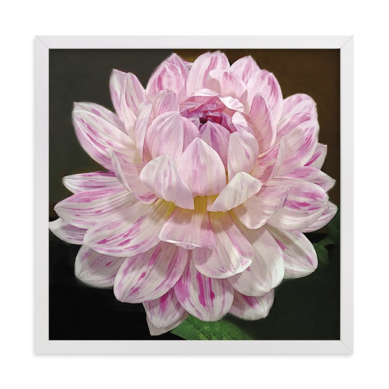 """""""Pink White Waterlily Dahlia"""" - Art Print by A Maz Designs in beautiful frame options and a variety of sizes."""