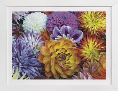 Dahlia Mix  Art Print