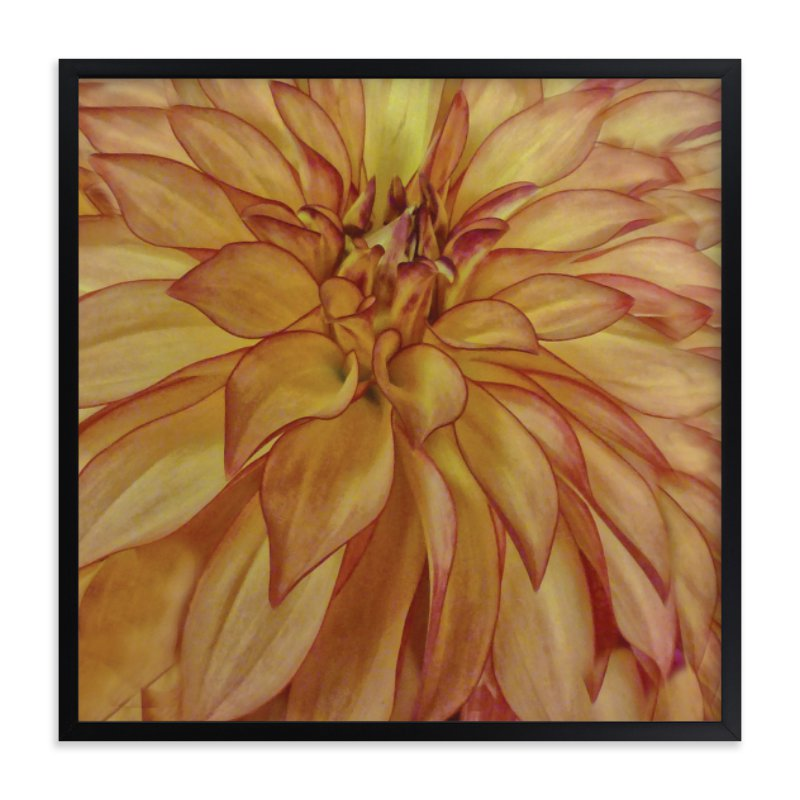"""""""Orange Tip Dahlia"""" - Art Print by A Maz Designs in beautiful frame options and a variety of sizes."""