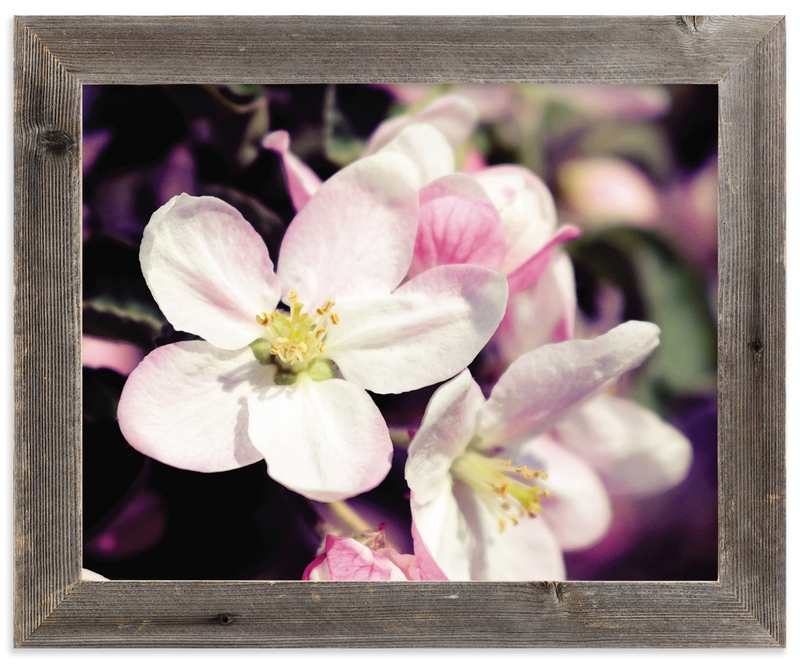 """""""Watercolour Apple Blossoms"""" - Art Print by Katrina Lindhorst in beautiful frame options and a variety of sizes."""