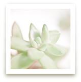 Soft Succulent No. 3
