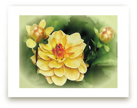 Focus on the Dahlia by Mazing Designs