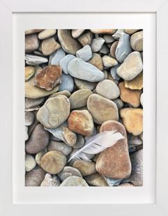 Beach Feather  Art Print