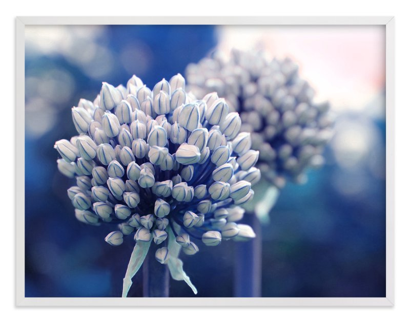 """""""Allium in Indigo"""" - Art Print by Karen Kaul in beautiful frame options and a variety of sizes."""