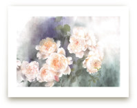 misty roses by XL
