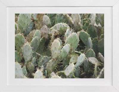 A Cancun Cactus  Art Print