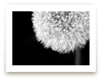 Dandelion Defined by Janelle Wourms