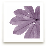 Leaf in Lilac by Jonathan Brooks
