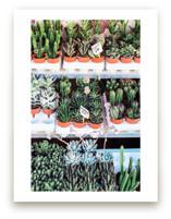 Succulent Market