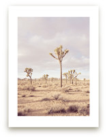 California Desert by Tania View