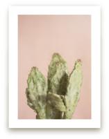 Blushing Cactus by Kristi Jackson