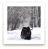 Winter's Spirit by Leslie Le Coq