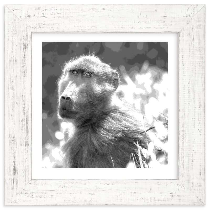 """""""mr BABOON"""" - Art Print by Gail Schechter in beautiful frame options and a variety of sizes."""