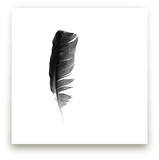 soul feather by Sarah Luna