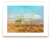 Wild Horse on the Edge by Jenifer Bacon