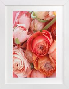 Ranunculus Tangle  Art Print