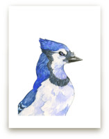 Blue Jay by Natalie Groves