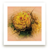 Yellow Waterlily Dahlia by Mazing Designs