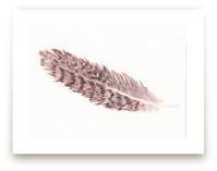 Hawk Feather by Prittybird