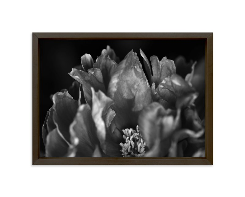 """Peony #1"" - Art Print by Lynn Lehto in beautiful frame options and a variety of sizes."