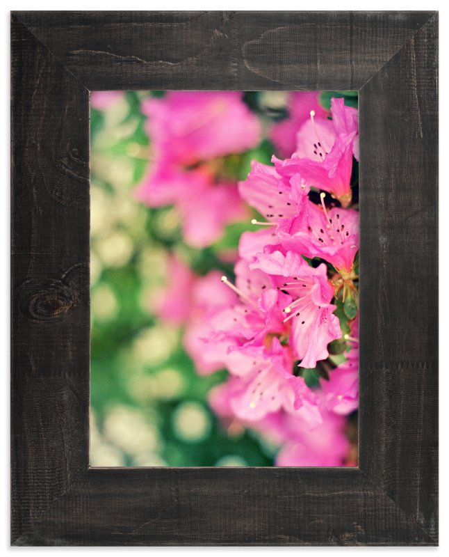 """""""Azaleas"""" - Art Print by Catherine Culvenor in beautiful frame options and a variety of sizes."""