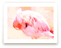 Nestled Flamingo by Michelle S.