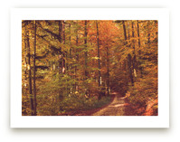 Fall in the Woods 1 by Heather Squance