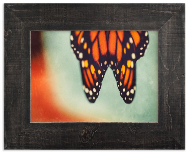 """Monarch Study #6"" - Art Print by Stacy Kron in beautiful frame options and a variety of sizes."