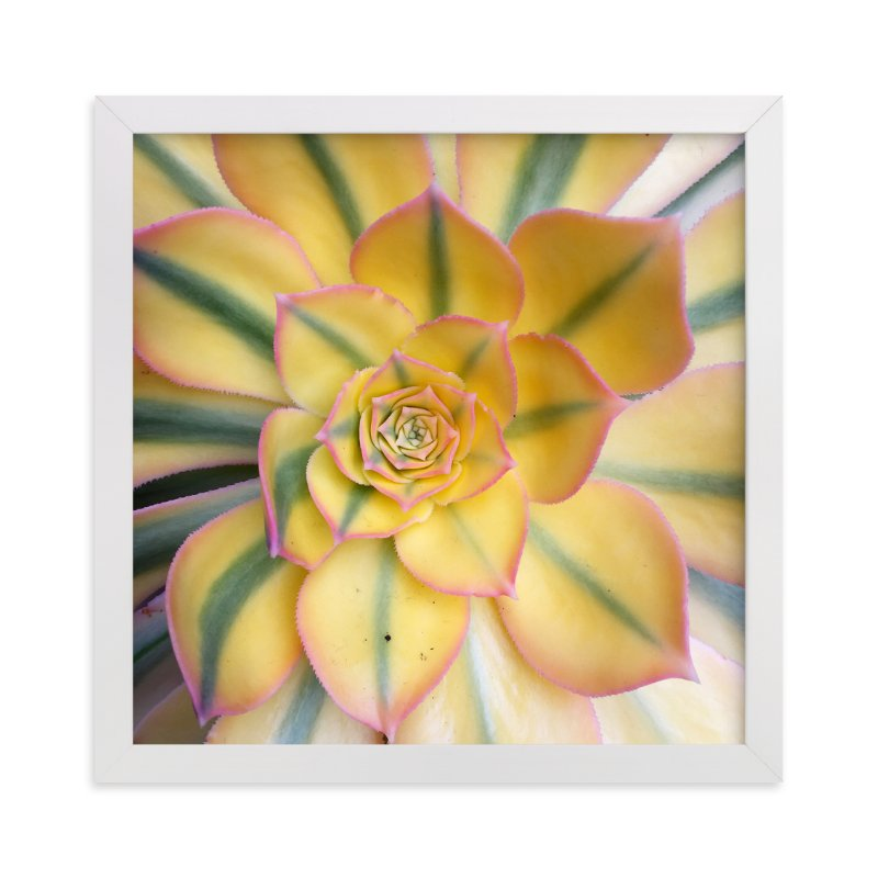 """""""succulent flowers"""" - Art Print by Becky Nimoy in beautiful frame options and a variety of sizes."""