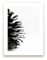 Pine Cone - Part 2 by Alexis Arnold