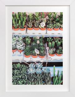 Succulent Market  Art Print