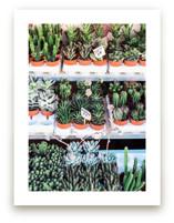 Succulent Market by Jenni Kupelian