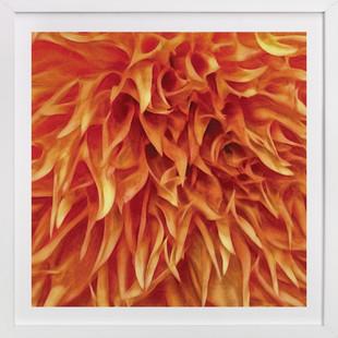 Dahlia Shag Look  Art Print
