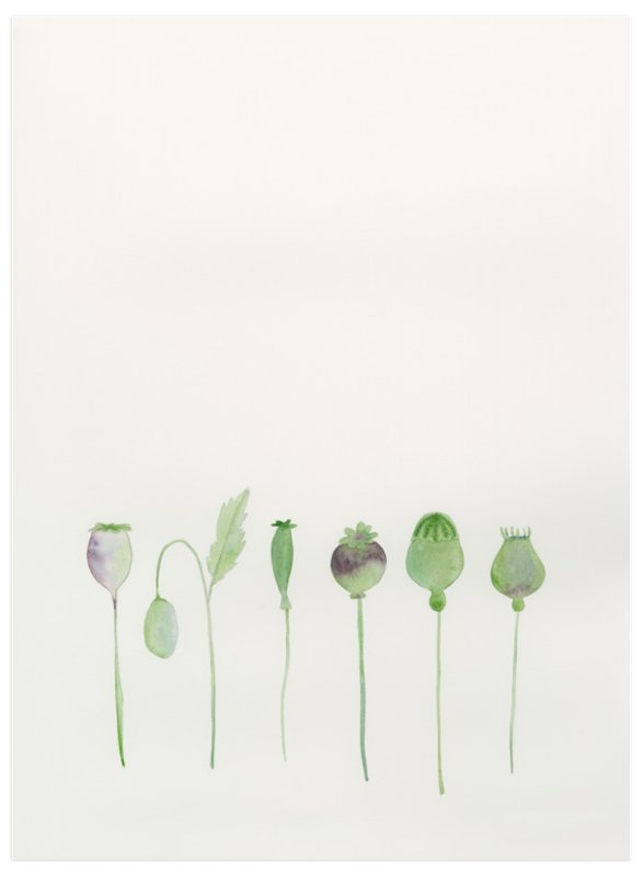 """Poppy Pods"" - Art Print by Monica Loos in beautiful frame options and a variety of sizes."