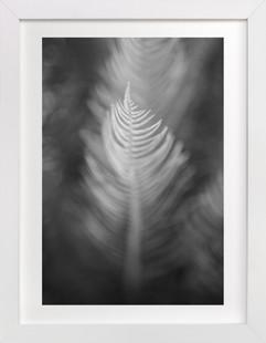 Soft Feathers  Art Print