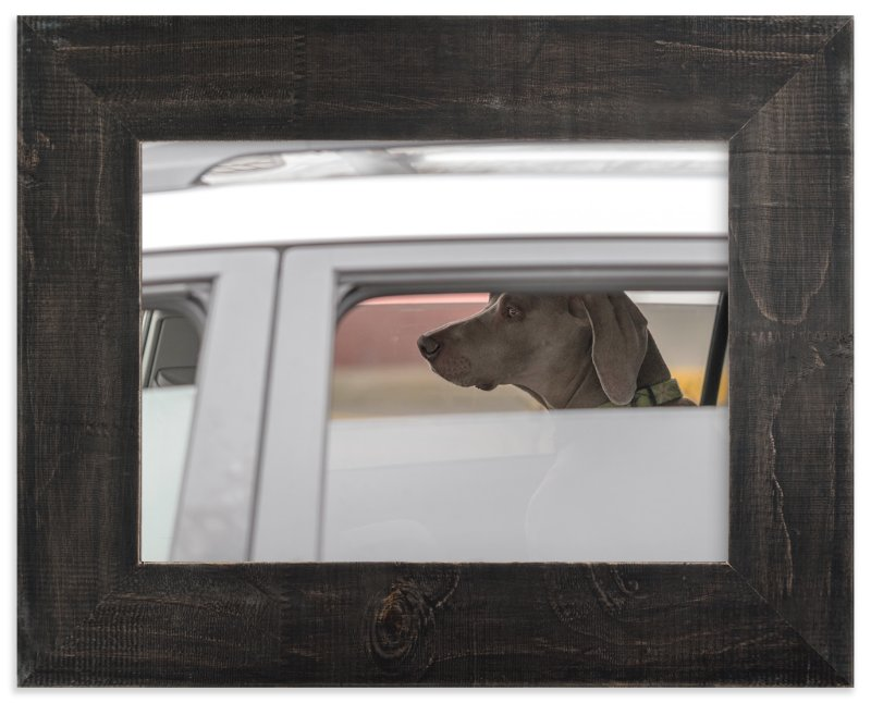 """""""dog"""" - Art Print by Gail Schechter in beautiful frame options and a variety of sizes."""