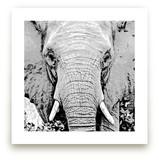 mr ELEPHANT by Gail Schechter