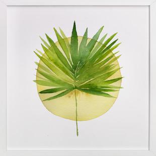 spotlight - fan palm  Art Print