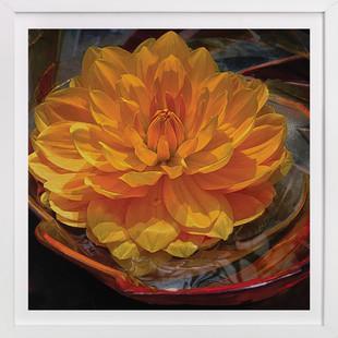 Golden Water Lily Dahlia  Art Print
