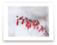 Winter Jewels by Karen Kaul