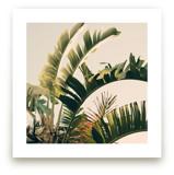 Tropic Sky by ALICIA BOCK