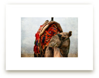 Grinning Camel by Heather Squance