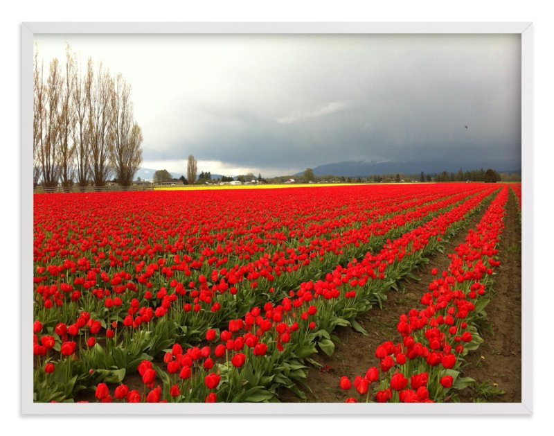 """Red Tulips"" - Art Print by Jan Kessel in beautiful frame options and a variety of sizes."
