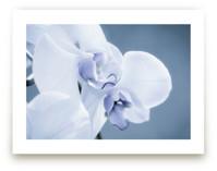 Orchid Beauty by Debra Butler
