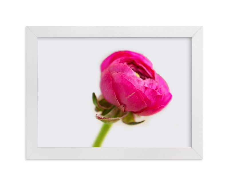 """""""Budding Ranunculus 2"""" - Art Print by Jessica Marchetti in beautiful frame options and a variety of sizes."""
