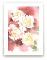 White David Austin Rose... by XL