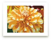Color My Dahlia by Mazing Designs