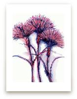 Wild Carnations by Me Amelia